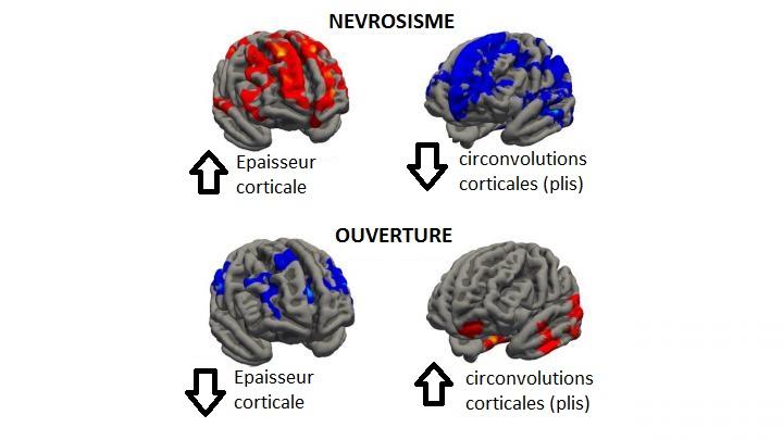 cerveau-perso-fr